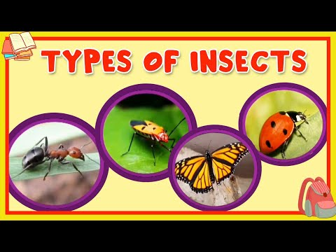 Learn About Different Type Of Insects