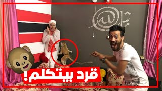 جبت قرد بيتكلم لمراتي   شوفو رد فعلها😂