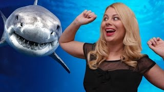 Je danse avec les requins ♡ Virginie fait sa cuisine