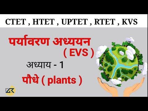 पर्यावरण अध्ययन ( EVS ) अध्याय - 1 पौधे ( Plants ) for CTET,UPTET,HTET,RTET ,KVS