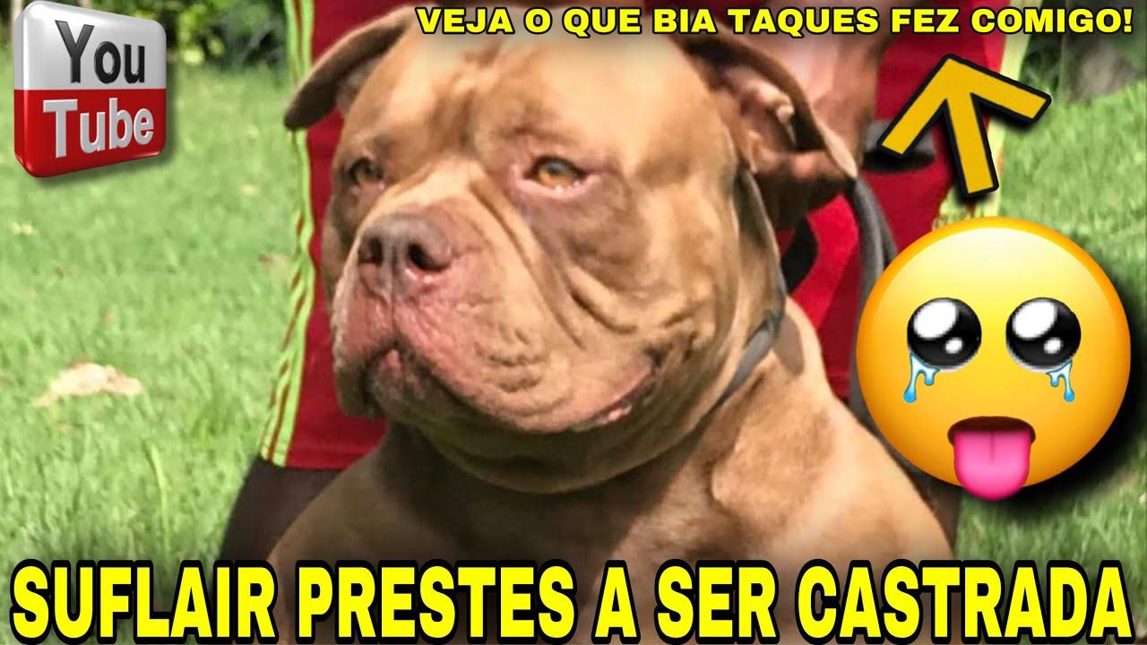 🔥SUFLAIR PRESTES A SER CASTRADA E VEJA O QUE @Bia Taques FEZ COMIGO!
