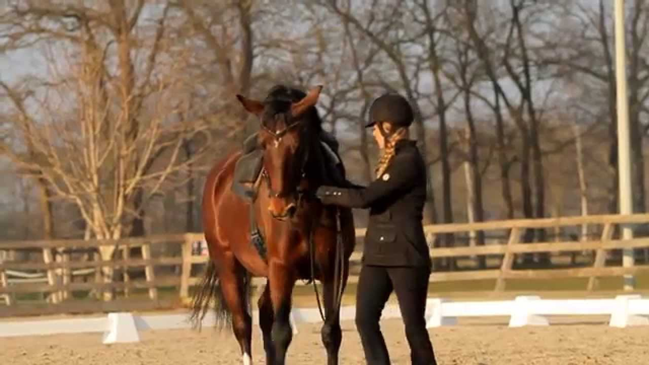 horse human academy training with greetje hakvoort youtube. Black Bedroom Furniture Sets. Home Design Ideas