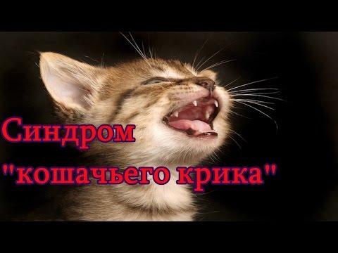 Синдром кошачьего крика