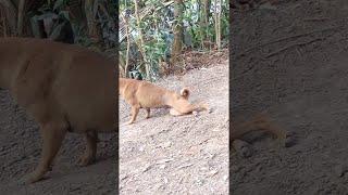 Dog's Strange Dragging Game || ViralHog