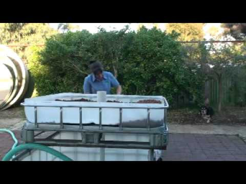 Building an ibc aquaponic system