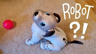 Our New Dog, AIBO: Pet Replacement Robot?!