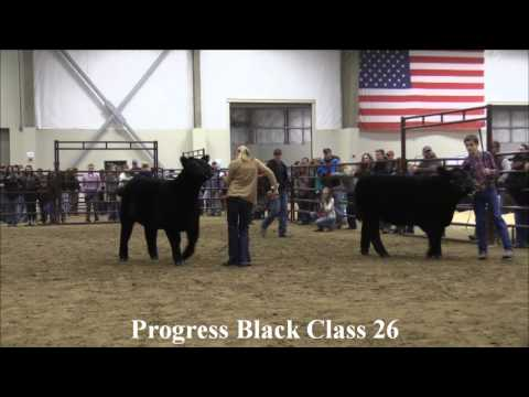MJC Winter Cattle Classic: Progress Black Classes 22-28
