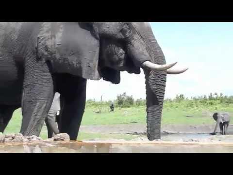 Thirsty Elephants at Somalisa Camp