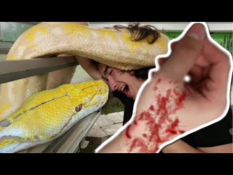 NOAH GETS CHOKED BY A HUGE SNAKE AND GETS A GNARLY SNAKE BITE! | BRIAN BARCZYK