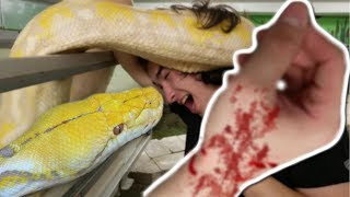 NOAH GETS CHOKED BY A HUGE SNAKE AND GETS A GNARLY SNAKE BITE! | BRIAN BARCZYK thumbnail