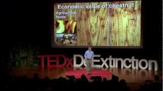 Reviving the American forest with the American chestnut | William Powell | TEDxDeExtinction