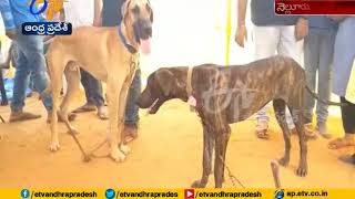 Dog Show Organised by the Kennel Club | Enthrals pet lovers | Nellore