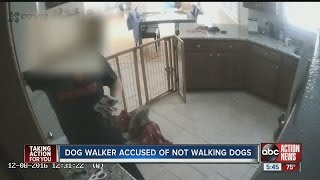 Download lagu Family says dog walker didn t walk dogs MP3