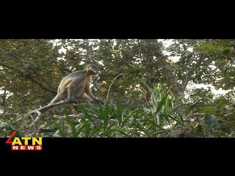 Jole Jongole - Modhupur National Park -...