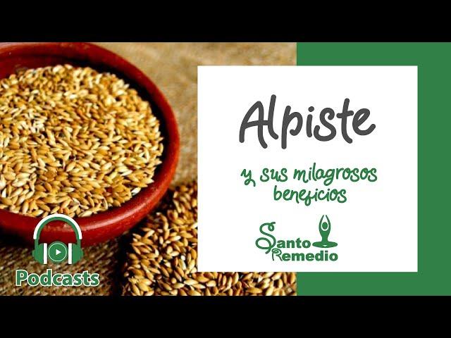Alpiste y sus milagrosos beneficios - Santo Remedio Panamá.