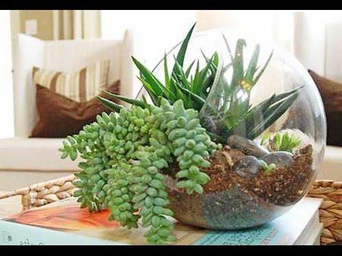 Что такое ФЛОРАРИУМ? Какие растения подойдут для флорариума