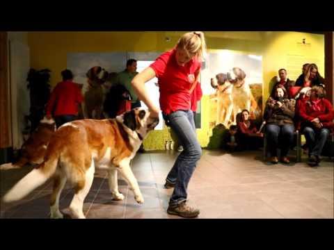 Dog dancing - 2016