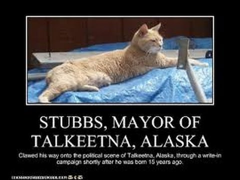 Stubbs the Mayor of Talkeetna, Alaska