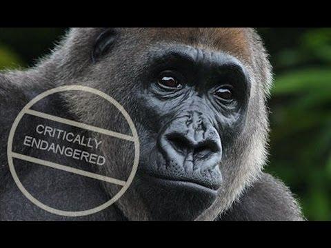 Harambe Cecil Wildlife Endangered Species Animal Rights ZOO Circus Poaching Vegan Extinct Dinosaur