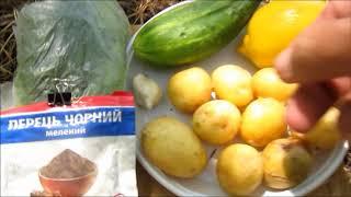 Готовим в лесу   Картошка под огуречным соусом
