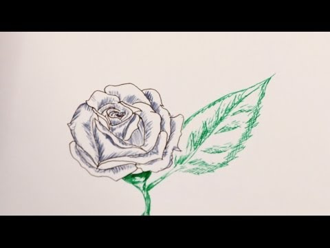 How to draw a rose flower step by step rose drawing for How to draw a rose step by step for beginners