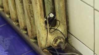 видео Скрытая камера в душе общежития красноярска
