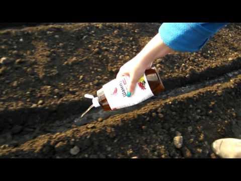 Морковь посадка быстрый способ урожай. день 9. | правильно | посадить | посадка | морковь | моркови | урожай | сажать | бистро | видео | блог