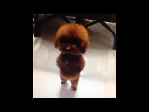 Funniest DANCING Dogs Compilation Video