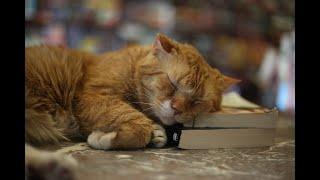 「気難しそうな顔」と言われた保護猫がいつの間にか古本屋のCEOになっていた