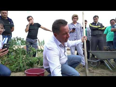 Как посадить малину.