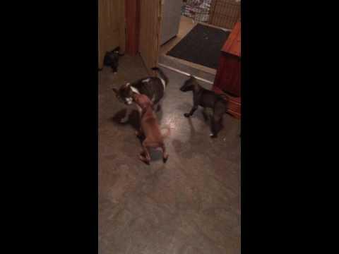 PuppyFinder.com : Play time
