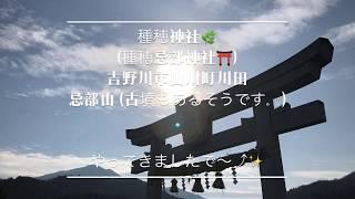 種穂神社⛩ / 吉野川市山川町川田忌部山・Tanaho  Shrine⛩ / Yoshinogawashi Yamakawa-cho Kawata Inbeyama