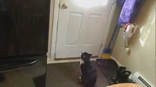 Mr. Smudge - The Annoying Cat