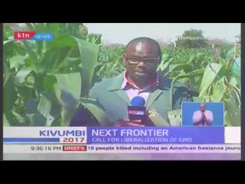 Benefits of genetically modified maize plant to the Kenyan farmer