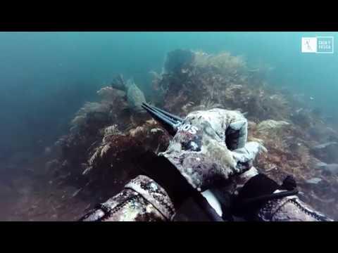 caza-y-pesca-tv---escuela-de-pesca-submarina---pesca-avanzada