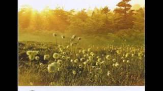 Bandari(班得瑞)-春天第一朵玫瑰 (first rose in spring).wmv thumbnail