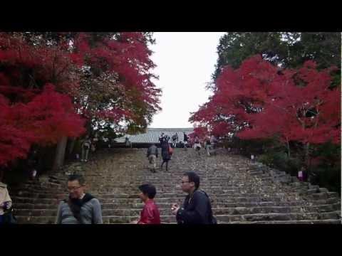 Autumn Leaves Jingo-ji