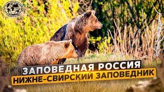 Заповедная Россия. Нижне-Свирский заповедник | @Русское географическое общество