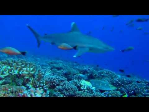 OceanWorld 3D oceany film przyrodniczy