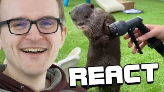 React: The Best Of The Internet (2020)