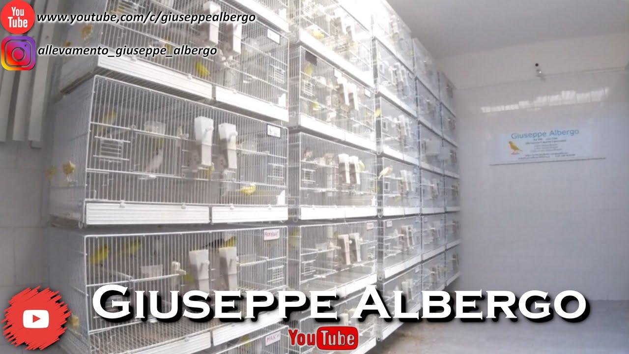 [ASMR] Natural Sounds of my Breeding - Suoni Naturali del mio Allevamento - Giuseppe Albergo