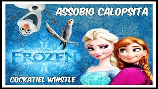 ASSOBIO CALOPSITA - FROZEN LET IT GO #1 - COCKATIEL WHISTLE