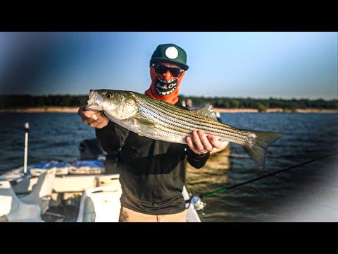 CRAZY STRIPER FISHING!! LAKE TEXOMA TAKEOVER 🤘🏼💥