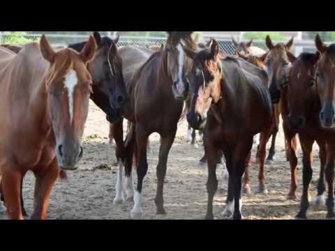 The Survivors: Cinco's Story | Houston SPCA