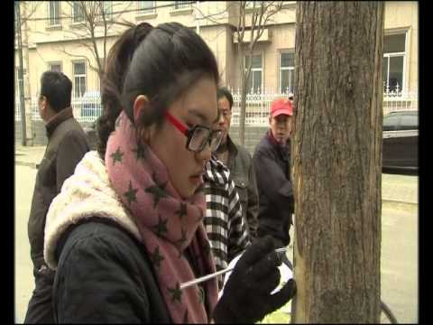 Tree Artist China [HD]