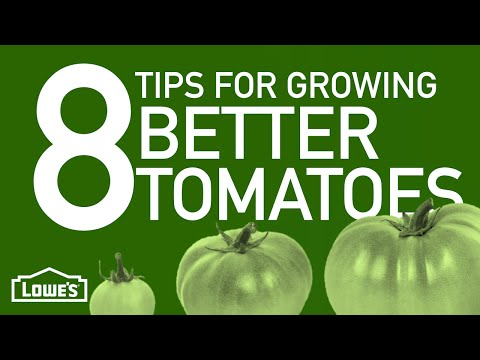 8 Tips For Growing Better Tomatoes | Gardening Basics w/ William Moss
