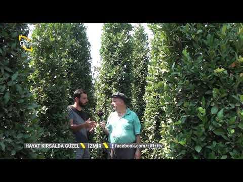 Defne Fidanı Yetiştiriciliği - Hayat Kırsalda Güzel / Çiftçi TV