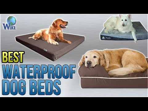 10-best-waterproof-dog-beds-2018