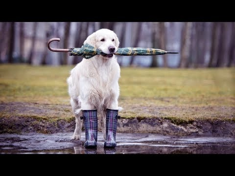 Try your best to not LAUGH AT THESE but you will FAIL! – FUNNIEST animal compilation 2017!