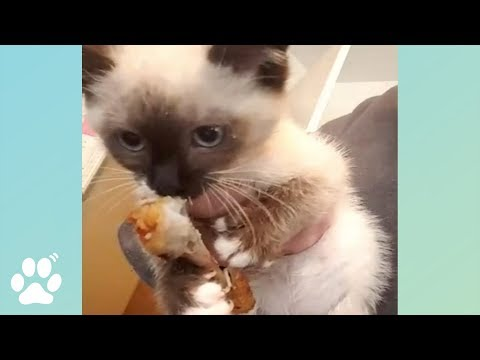 Adorable Kitten Thieves and More | Funny Cat Videos